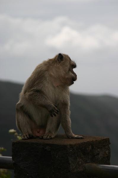Mono en mirador Gorges Rivière Noire