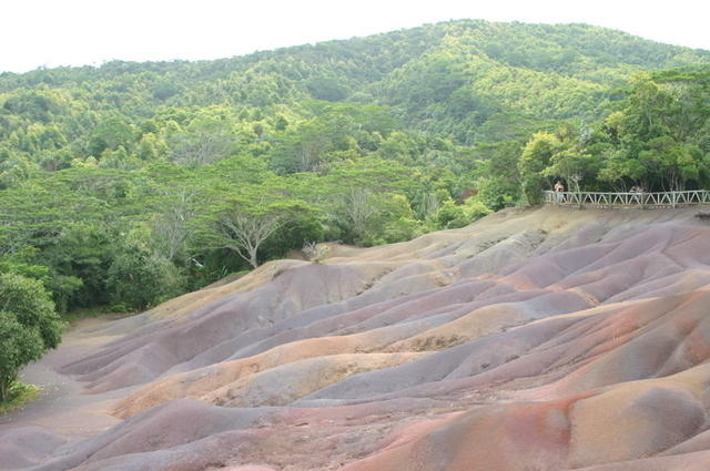 Colores bajo la selva