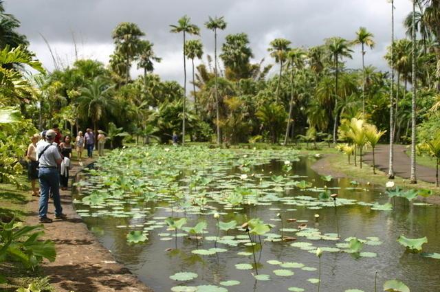 Lago Pamplemousses
