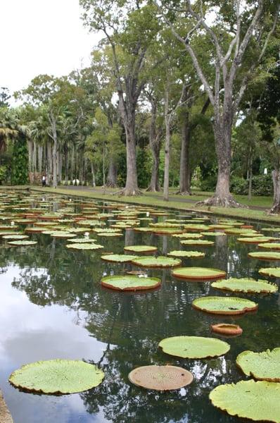 Lago de nenúfares