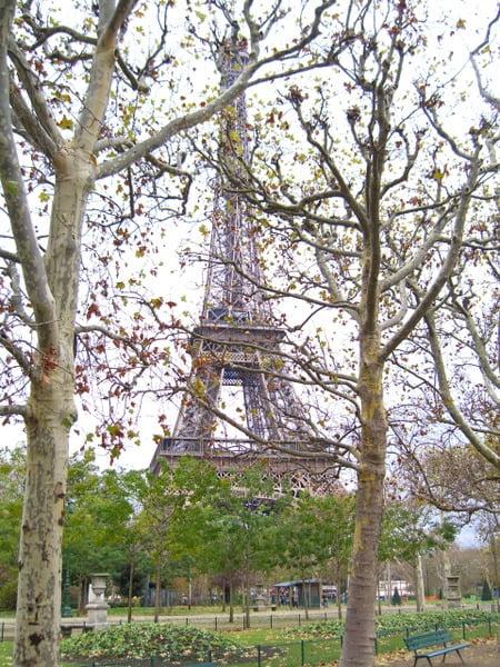La torre Eiffel entre árboles