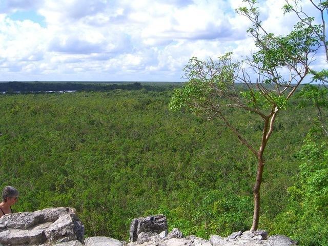 Vistas de la selva