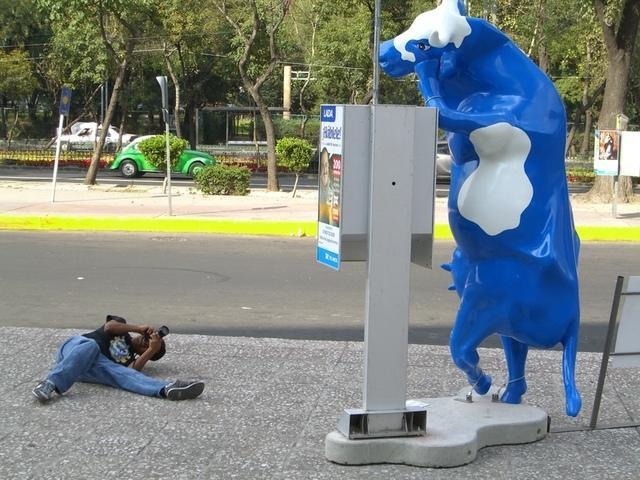 Cow Parade México